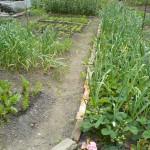 Knoblauch und Erdbeeren