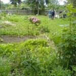 Beete und Rasen