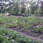 Ton Steine Gärten