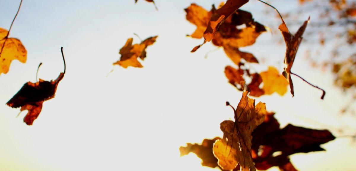 Herbstfest im Stadtgarten